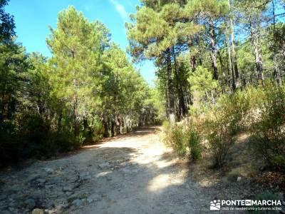 Jarosa - Agua y Bosque Plateado; excursiones y senderismo;actividades senderismo madrid